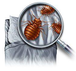 bed-bug-infestation